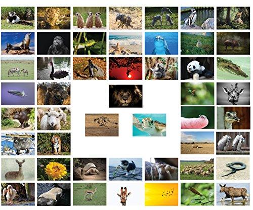 Tiere Postkarten - 50 verschiedene Tierpostkarten-set ideal für Sammler und Postcrossing