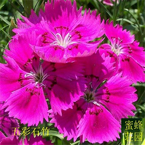 Graines colorés petits exclus brodé bambou pour Bebaizhen Dix types de 100 graines américaines (wu cai shi zhu) 4