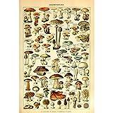 Meishe Art Pilze Poster Jahrgang Kunstdrucke Plakate
