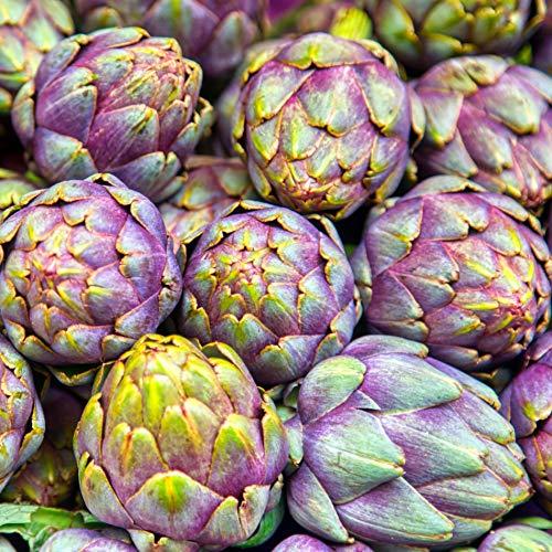 Samen für ca. 10 Pflanzen Violet de Provence Artischocke - violette Blütenköpfe, dekorative Sorte