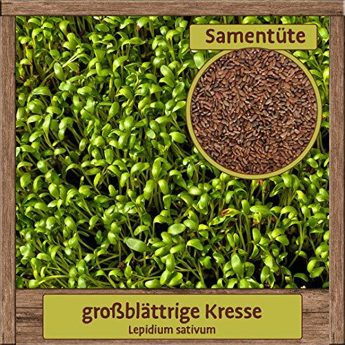 4000 Hochwertige Kresse-Samen essbare Garten-Kresse Saatgut Lepidium sativum großblättrig mit hoher Keimfähigkeit