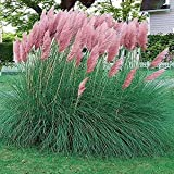 SEEDS ONLY, no live plants.The photos show are the mature plant in the future, not the actual plant you will receive. 100PCS seeds in per bag. Perfect for backyard gardens and patio container gardening. If you have any question about the products and...