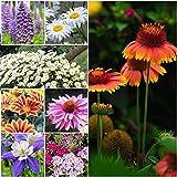 1Package of 25000-500000 Seeds, Perennial Wildflower...
