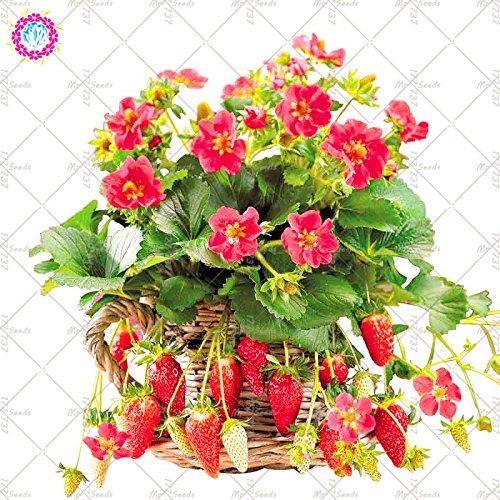 300PCS Strawberry graines en pot santé délicieux fruits Bonsai plantes de jardin est facile à cultiver