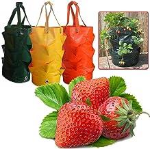 Fdrirect Saco do plantador de morango de 3 galões (saco do plantador de suspensão) para o cultivo vertical de batata ao ar...