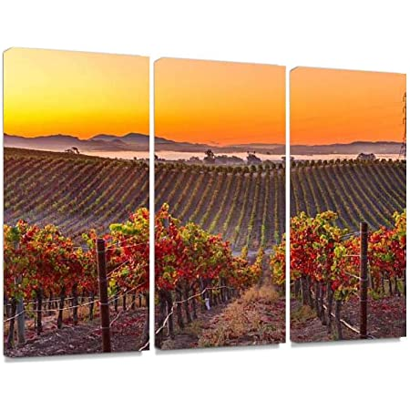 Amazon Com Early Morning Vieyard In Napa Valley California Print On Canvas Wall Artwork Modern Photography Home Decor Unique Pattern Stretched And Framed 3 Piece Posters Prints