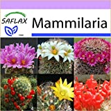 SAFLAX - Kakteen - Mammilaria Mischung - 40 Samen -