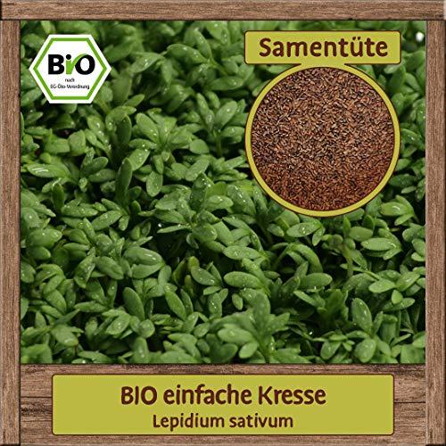 BIO Kresse Samen Gartenkresse Kräutersamen einfache Anzucht Kressesaat zum Anbau & Säen
