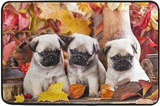 Tapis 23.6x15.7 Pouce Feuilles d'érable à l'automne Carlin Puppy Dog Paillasson Tapis de Sol Entrée extérieure intérieure ...