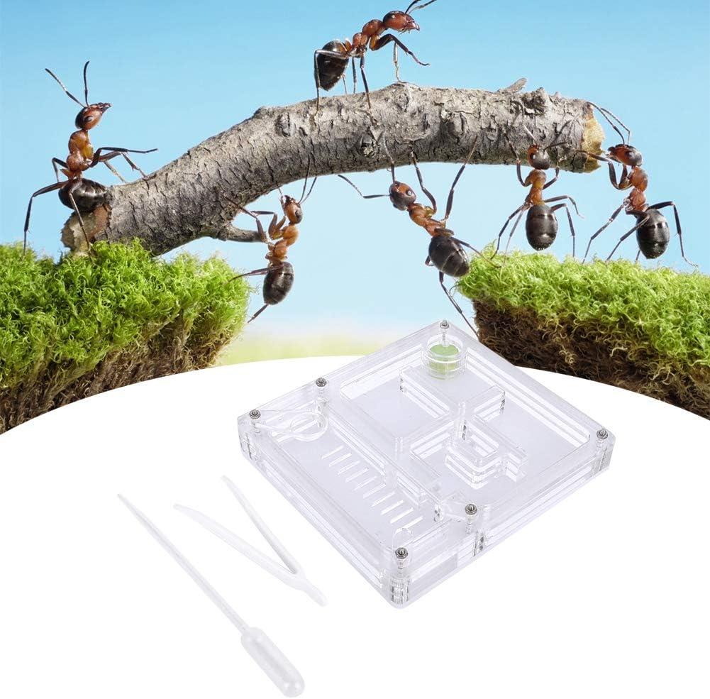 Hormiga granja acrílico caja de cría de hormigas transparente insecto villa cría de hormigas casa de cría de hormigas caja de alimentación nido de hormigas regalo de cumpleaños