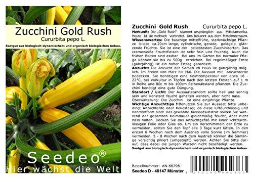 Seedeo® Zucchini Gold Rush (Cururbita pepo L.) 20 Samen BIO