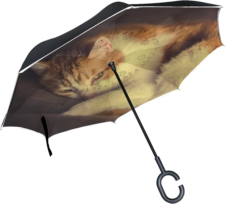 Animal Cat Turkish Van Animated Adorable Animated Fluffy Real Pet Ingreened Umbrella Large Double Layer Outdoor Rain Sun Car Reversible Umbrella
