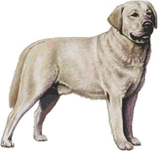 Labrador Retriever Dog Counted Cross Stitch Pattern