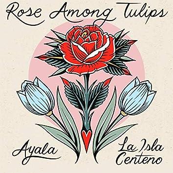 Rose Among Tulips