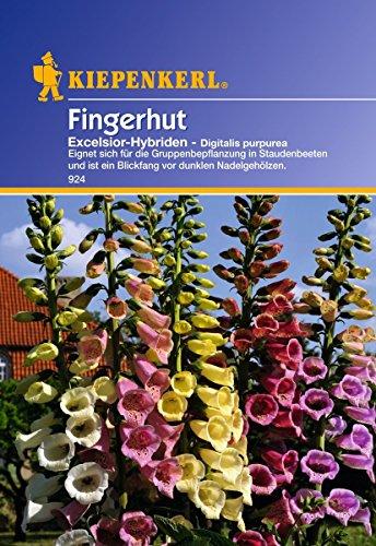 Sperli Blumensamen Fingerhut Excelsior-Hybriden, grün