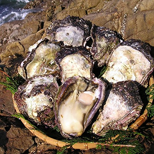 宮崎日向灘産 天然岩牡蠣 (中サイズ 20個)