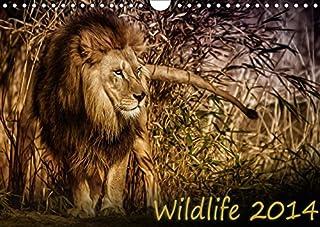 Wildlife 2017 (Wandkalender 2017 DIN A4 quer): Wilde Tierwelt in fantastischen Aufnahmen (Monatskalender, 14 Seiten )