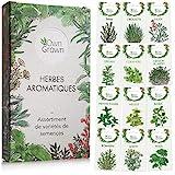 Kit de graines d'herbes aromatiques prêt à pousser OwnGrown, 12...