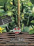 Zucchini, Quine, Cucurbita pepo