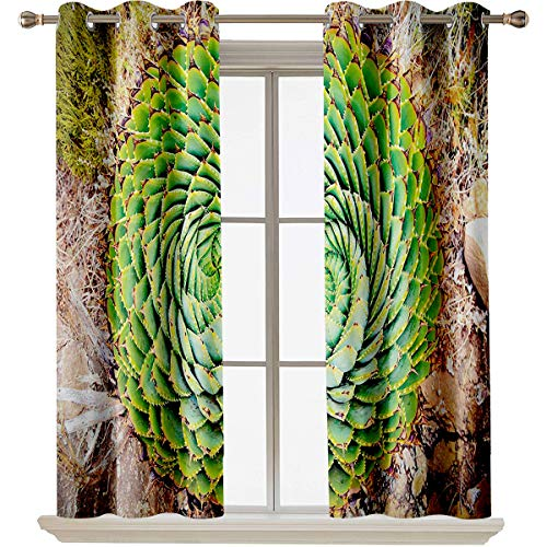 Plant best home fashion thermal insulated blackout curtains National Flower of Lesotho South of Africa Aloe Polyphylla Spinning Spiral Aloe Vera Suitable forThe best choice for bedroom and living roo
