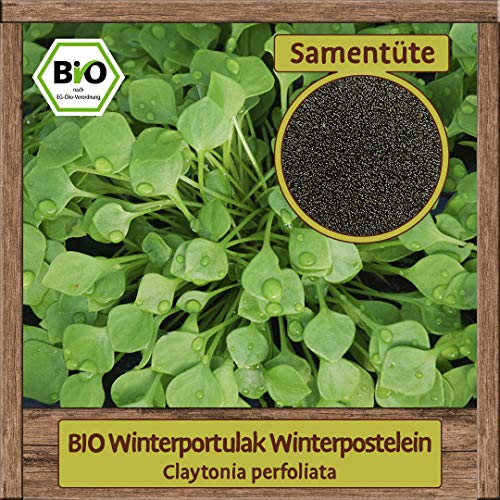 BIO Portulak Samen Winterpostelein (Claytonia perfoliata) Postelein Gemüsesamen winterhart