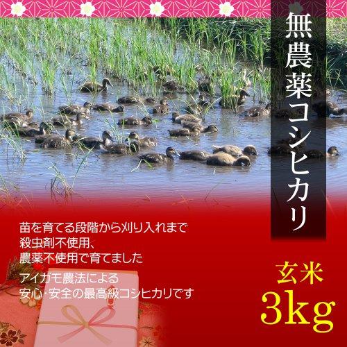 【父の日 プレゼント・カード付】無農薬米コシヒカリ 3kg 玄米・贈答箱入り/ギフトにアイガモ農法で育てた安全な新潟米