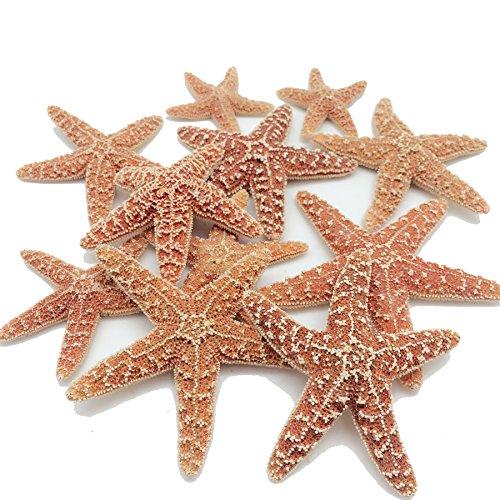 PEPPERLONELY 6PC Orange Natural Sugar Starfish, 2 Inch ~ 3-7/8 Inch
