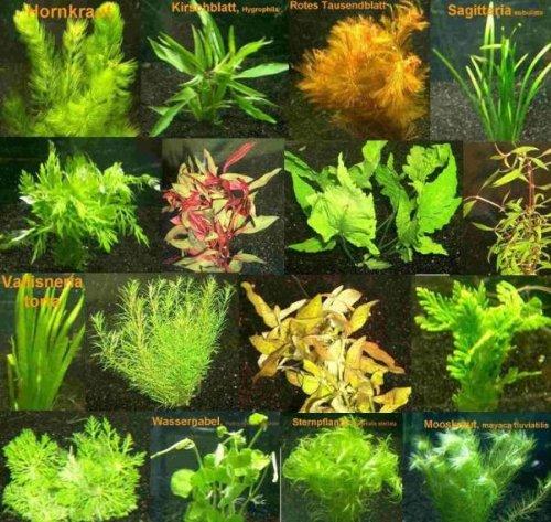 9 Bund - ca. 55 Aquarienpflanzen + Dünger, Anti Algen, buntes Sortiment, Pflegeleichte Sorten - Mühlan