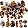 Elegant life 松ぼっくりセット 天然 30個入 松かさ 松ぼっくり 装飾 クリスマス ツリー飾り クリスマス ツリー DIY の装飾 8種類(B)