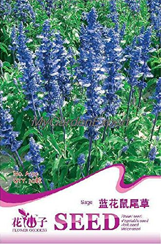 90pcs de vente Hot / Graines 3Bags Blue Sage Salvia farinacea Jardin Balcon Bricolage Fleur Bonsai Graines