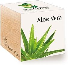 e bianco aloe vera semi Seed Pinkdose Aloe vera pianta verde semi rossi semi aloe vera