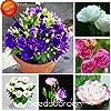 Vendita calda 7 colori Semi Eustoma perenne piante da fiore in vaso Fiori Semi Lisianthus Semi -! 100 PCS, # 6TH1R1 #4