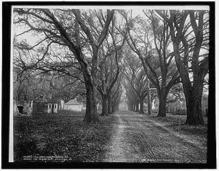 Photo: Hermitage,plantations,roads,dwellings,structures,homes,Savannah,Georgia,GA,c1900