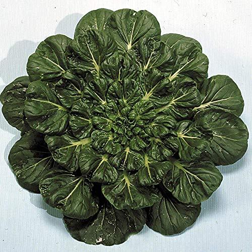 Suffolk Herbes - Tatsoi Rosette Pak Orientale Choi - 150 graines