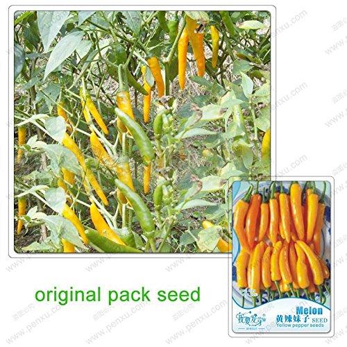 20 graines/Pack, graines de poivron jaune, poivrons communs, légumes balcon, graines de légumes biologiques non-OGM mis en pot