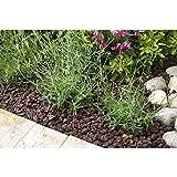 R'garden | Pouzzolane | Pouzzolane arbustes, conifère, Vivace, Plante d'intérieur | Réduit Les arrosages | Facilite Le Drainage
