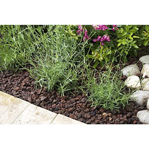 Rgarden | Pouzzolane | Pouzzolane arbustes, conifère, Vivace, Plante dintérieur | Réduit Les arrosages | Facilite Le Drainage