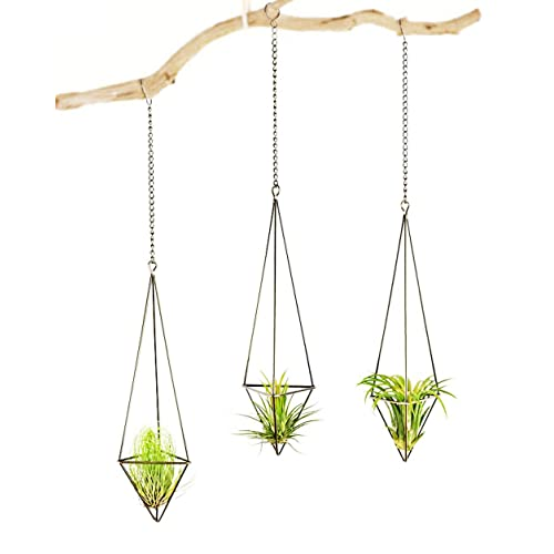 Hanging Air Plants Amazoncom