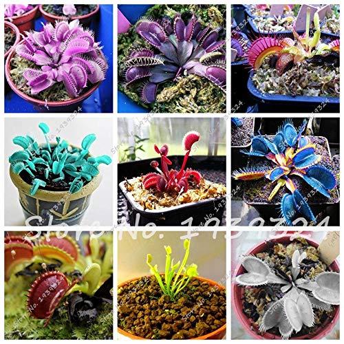 Gemischt: 100 Stücke Blau Insektenfressende Pflanze Exotische Samen Importiert Dionaea Muscipula Seltene Venus Fliegenfalle Bonsai Samen Topf Orquideas Para