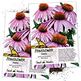 Seed Needs, Purple Coneflower (Echinacea purpurea) Twin Pack of 500...