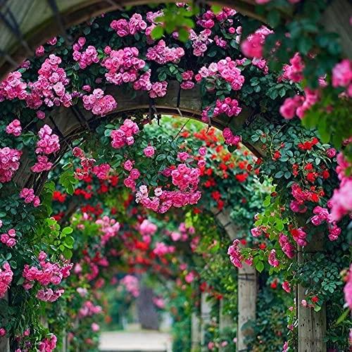 Arco de Jardín Pérgola, Arco de Rosas para Enredaderas Subiendo Las Plantas Decoración de Exterior, Negro Blanco Metal Arco jardín, Resistente a la Intemperie (Color : White, Size : H200xW80cm)