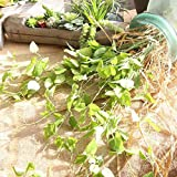 Artificial and Dried Flower 1pc Artificial Flower Green Rohdea Japonica 97cm Wedding Silk Material Home Decoration About Party Home Decoration - ( Color: Green )