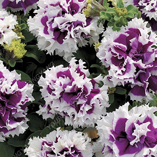 100pcs Petunia Seeds Four Seasons peut être planté 25 sortes de couleurs Pétunia Graines de fleurs Bonsai pour le bricolage jardin Plantation Jaune