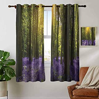 Modern Farmhouse Country Curtains Woodland,Sun Illuminates a Carpet of Bluebells Blooms Deep in Woodland Oxfordshire, Violet Green Yellow,Design Drapes 2 Panels Bedroom Kitchen Curtains 42