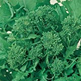 Broccoli Raab Seeds - Spring Rapini - 3 g Packet ~900 Seeds - Organic, Non-GMO, Heirloom - Vegetable Garden, Microgreens