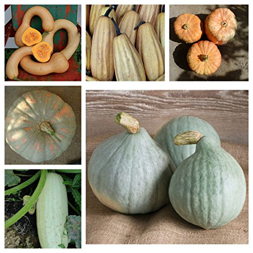 popular squash seeds, 6 kinds,40 graines, separately packed