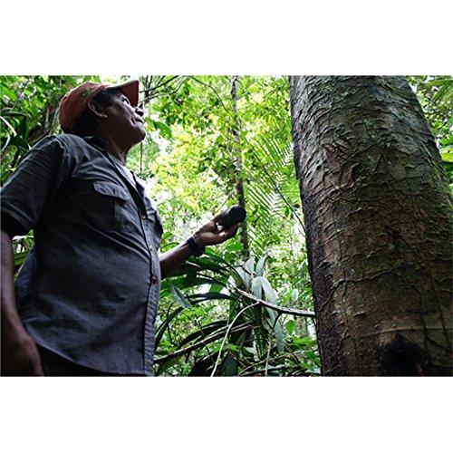 聖木樹液コパイバマリマリプレミアム20ml