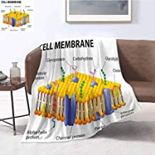 Luoiaax Educational Luxury Special Grade Blanket Detailed Diagram of Membrane Cell Structure Types of Protein Molecules Multi-Purpose use for Sofas etc. W70 x L90 Inch Yellow Blue Green
