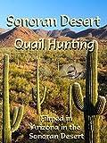 Sonoran Desert Quail Hunting