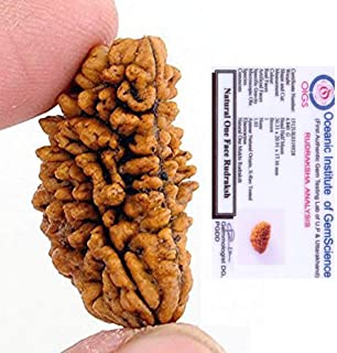 RUDRADIVINE Lab Certified 1 Faced Rameshwaram Beads Almighty Rudraksha (Brown)   1 mukhi   one face rudraksha